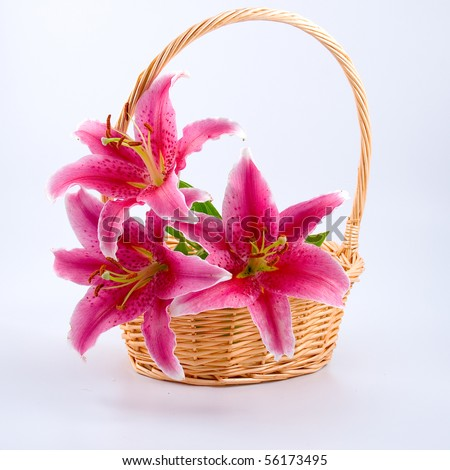 Bouquet of lilies in a wicker basket - stock photo