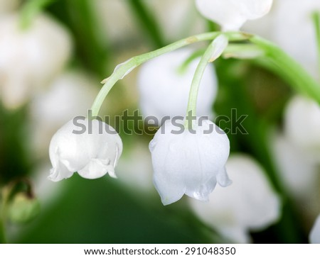 bouquet of lilies of the valley closeup - stock photo