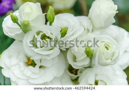 bouquet of lisianthus /  Eustoma flowers  in the garden,the plant that look like a rose but without thorns.