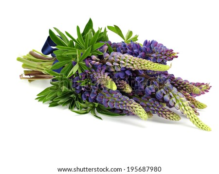 Bouquet of lupine flower with blue bow on a white background - stock photo