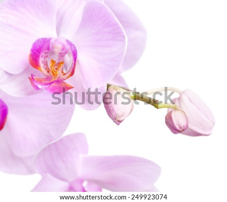 bouquet of magenta orchids is isolated on white background