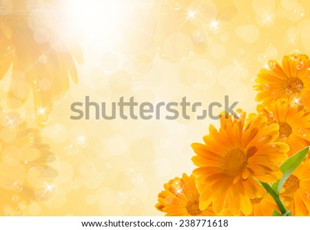 Bouquet of marigold on an orange background with stars. Space for text. - stock photo
