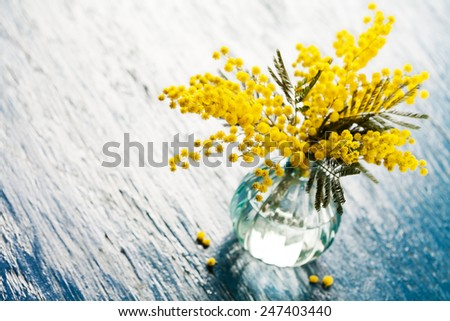 Bouquet of mimosa (silver wattle) in vase on wooden background - stock photo