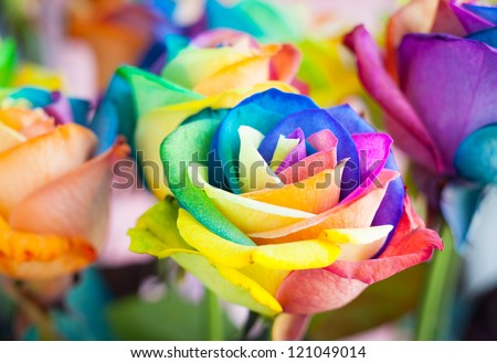 bouquet of multi-colored roses (Rainbow rose) - stock photo