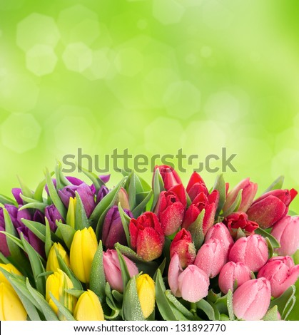 bouquet of multicolor tulips over blurred green background. fresh spring flowers with water drops - stock photo