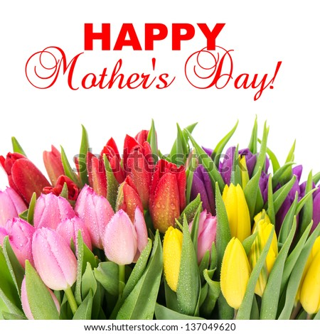 bouquet of multicolor tulips over white background. fresh spring flowers with water drops. Mother's Day concept with sample text. selective focus - stock photo
