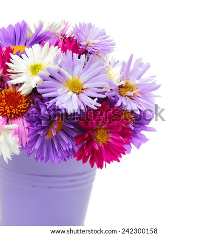 Bouquet of multicolored asters in a bucket on white background - stock photo