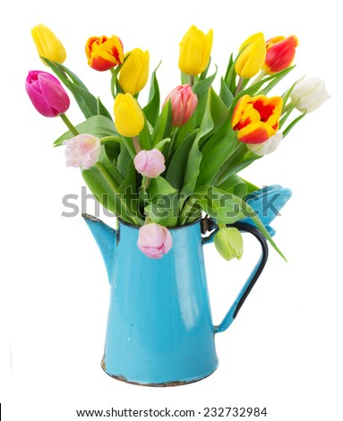 bouquet of multicolored  tulip flowers in blue pot  isolated on white background - stock photo