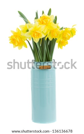 bouquet of narcissus in blue vase isolated on white background - stock photo