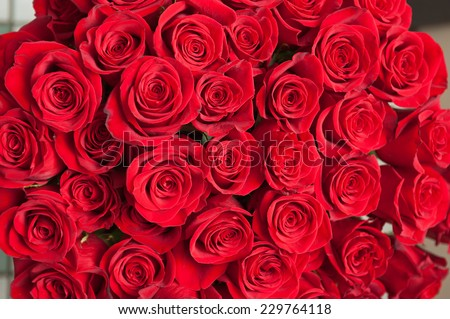 bouquet of natural roses background - stock photo