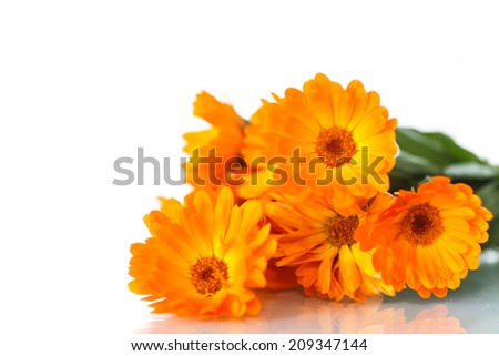 bouquet of orange calendula blossoms on white background