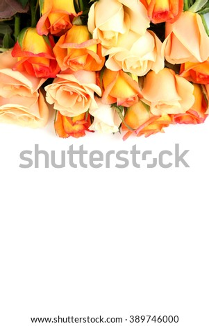Bouquet of orange roses on white background
