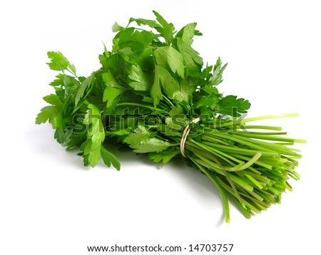 Bouquet of parsley tied with an elastic band in white background.