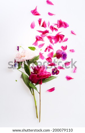 bouquet of peonies - stock photo