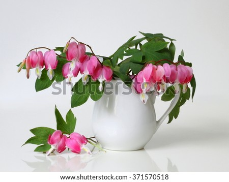 Bouquet of pink bleeding heart flowers in a vase. Romantic floral still life with bouquet of pink flowers in a vase. Lamprocapnos Dicentra spectabilis, bleeding-heart, lyre flower, Dutchman´s breeches - stock photo