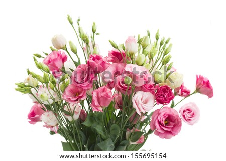 Bouquet of pink eustoma flowers isolated on white - stock photo