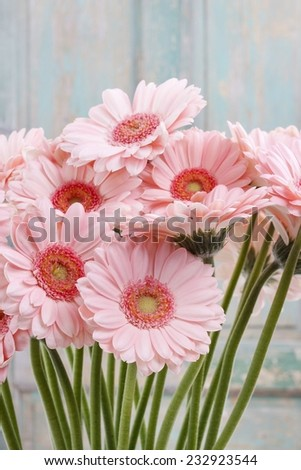 Bouquet of pink gerbera daisies - stock photo