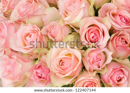 bouquet of pink luxury roses close up - stock photo