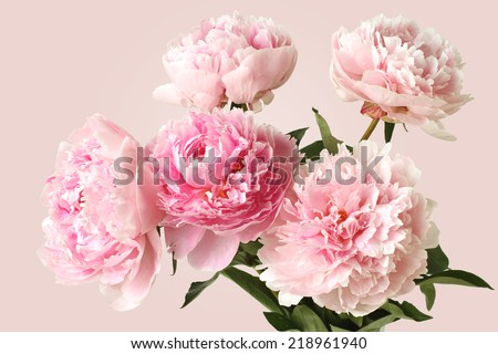Bouquet of pink peonies on pink background - stock photo
