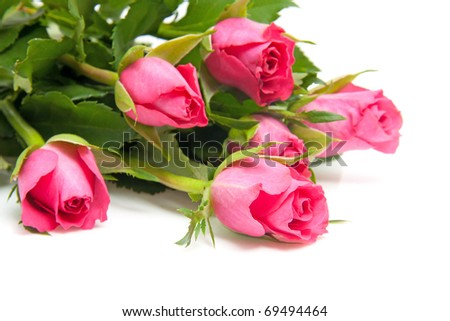 Bouquet of pink roses in closeup over white background - stock photo