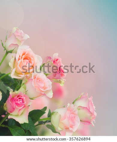 bouquet of pink  roses on blue and pink bokeh background - stock photo