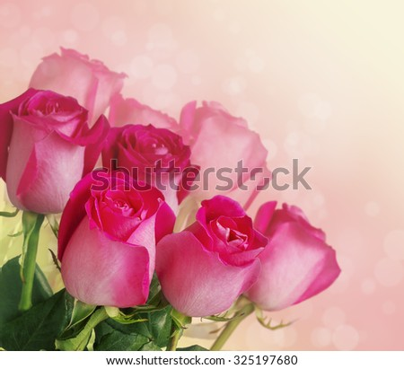 bouquet of pink roses on white pink background toning - stock photo