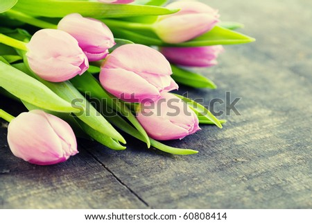 Bouquet of pink tulips - stock photo