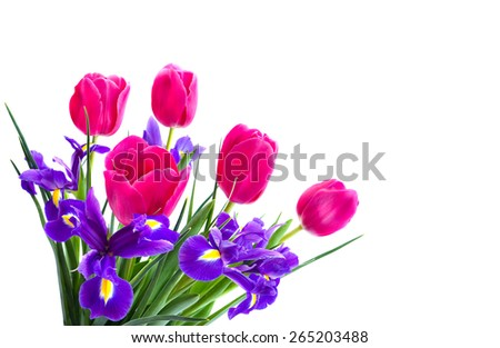 Bouquet of pink tulips and bulbous iris on white background - stock photo
