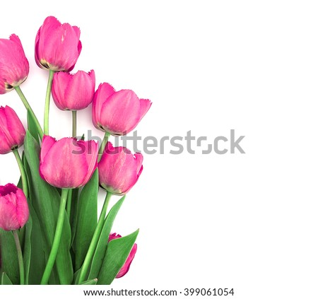 Bouquet of pink tulips isolated on white background. Valentine's Day and Mother's Day background. Top view - stock photo