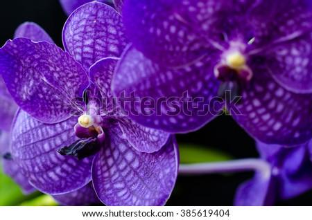 Bouquet of purple orchids.(Vanda),Closup focus,Selective focus - stock photo