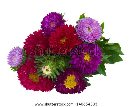 bouquet of red and violet  aster flowers   isolated on white background