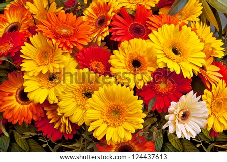 Bouquet of red and yellow gerberas. Abstract background.