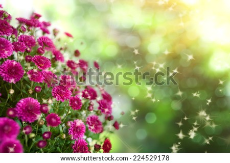 bouquet of red chrysanthemums on a white background isolated