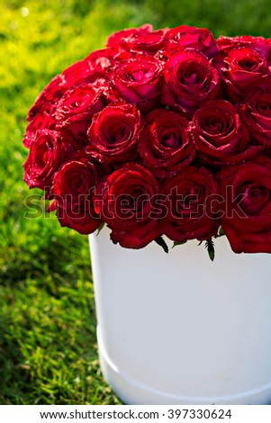 Bouquet of red roses in a box on the grass - stock photo