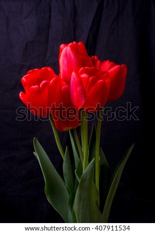 bouquet of red tulips on a black background - stock photo