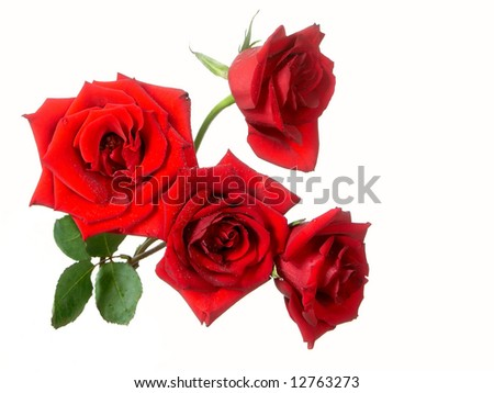 bouquet of roses isolated on white - stock photo