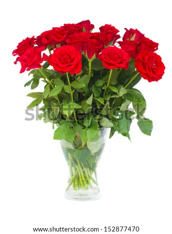 bouquet  of scarlet roses in vase    isolated on white background - stock photo