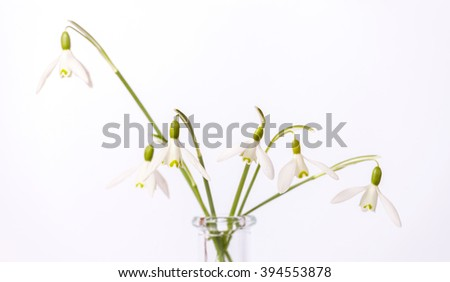 Bouquet of snowdrop flowers in glass vase - stock photo