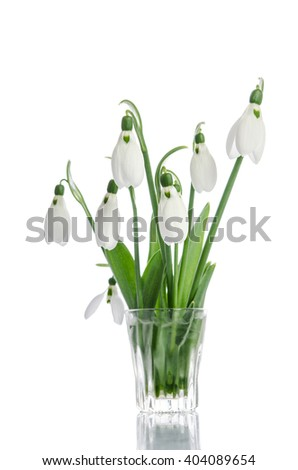 bouquet of snowdrop flowers in glass vase  isolated on white background - stock photo