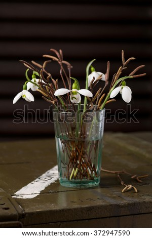 Bouquet of snowdrops flowers and birch buds branches in a glass vase. (Galanthus)  - stock photo