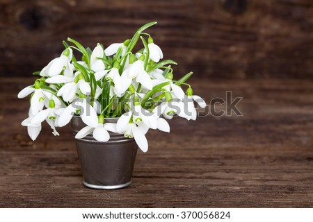 Bouquet of Snowdrops in little tin bucket on wooden vintage board - stock photo