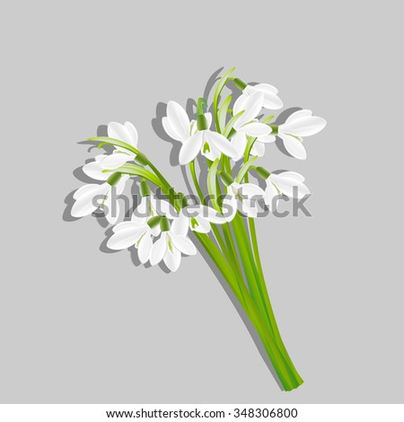 Bouquet of snowdrops isolated on grey background . Spring flowers. Useful for congratulation, greeting, invitation and postcard. Rasterized version