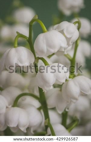 Bouquet of spring flowers lily of the valley