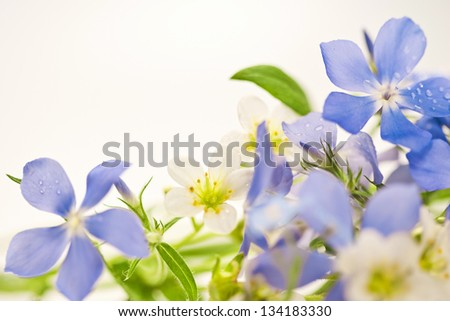 Bouquet of spring flowers on a white background - stock photo