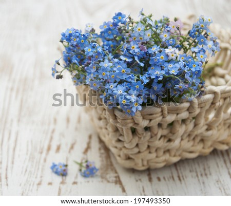 Bouquet of spring forget me not  flowers in basket - stock photo