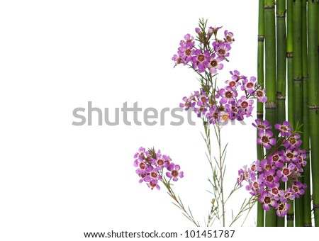 bouquet of spring orchid flowers with thin bamboo grove