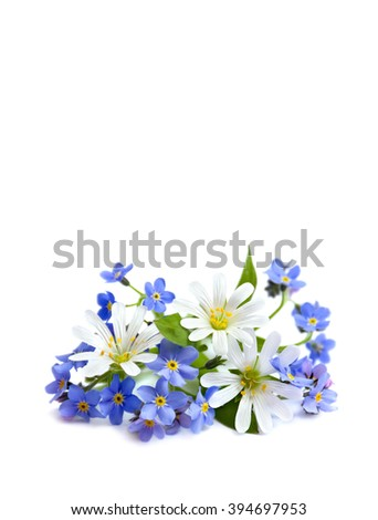 Bouquet of Stellaria holostea (or addersmeat, or greater stitchwort) and forget-me-not on white background with space for text.