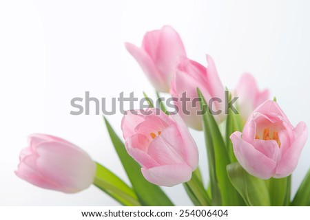 Bouquet of the fresh pink tulips - stock photo