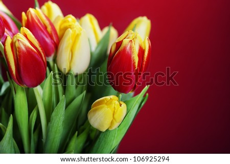 bouquet of the fresh red and yellow tulips - stock photo