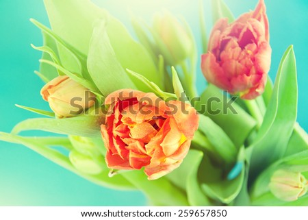 Bouquet of the fresh tulips on the blue. - stock photo